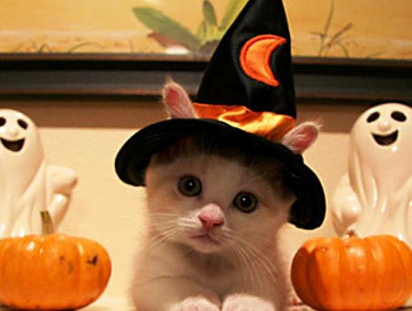 15-hilarious-cats-in-costumes-kitten-witch